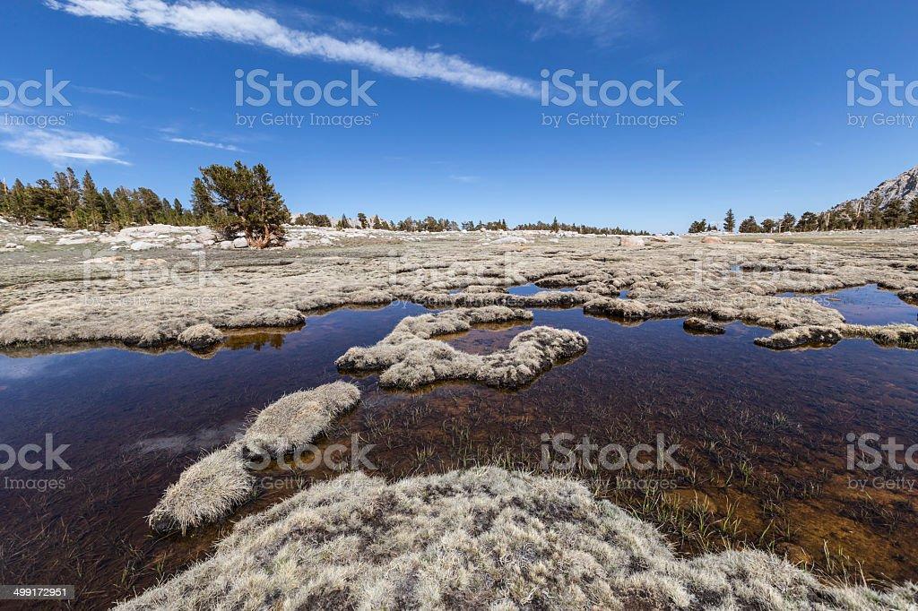 Alpine Tundra stock photo