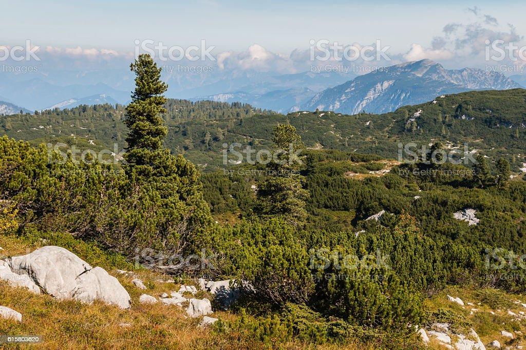 alpine vegetation in Hoher Dachstein Alps, Austria stock photo