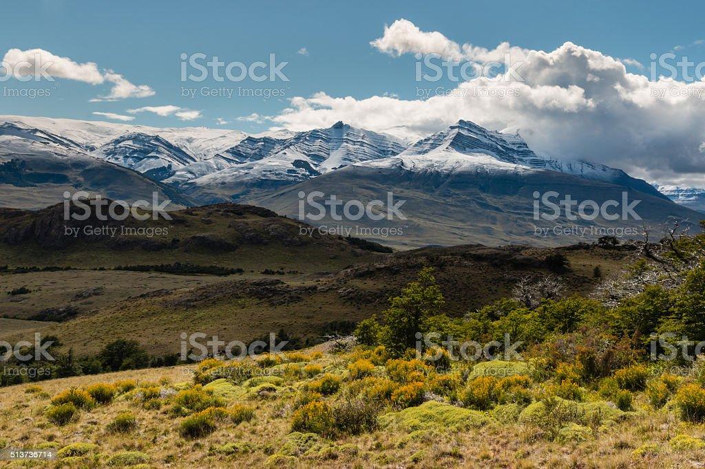 alpine vegetation in Southern Patagonia stock photo