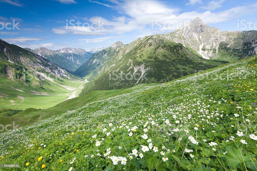 alpine view from the anhalter hut tirol, austria, alps stock photo