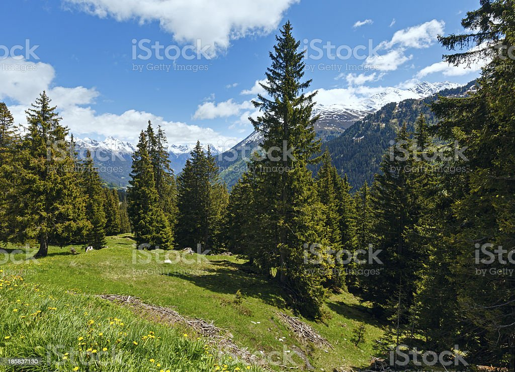 Alpine view with yellow dandelion flowers royalty-free stock photo