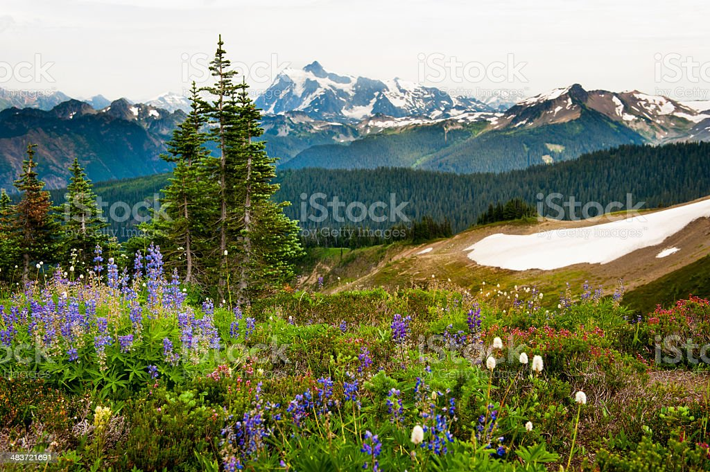 Alpine Wildflowers. stock photo
