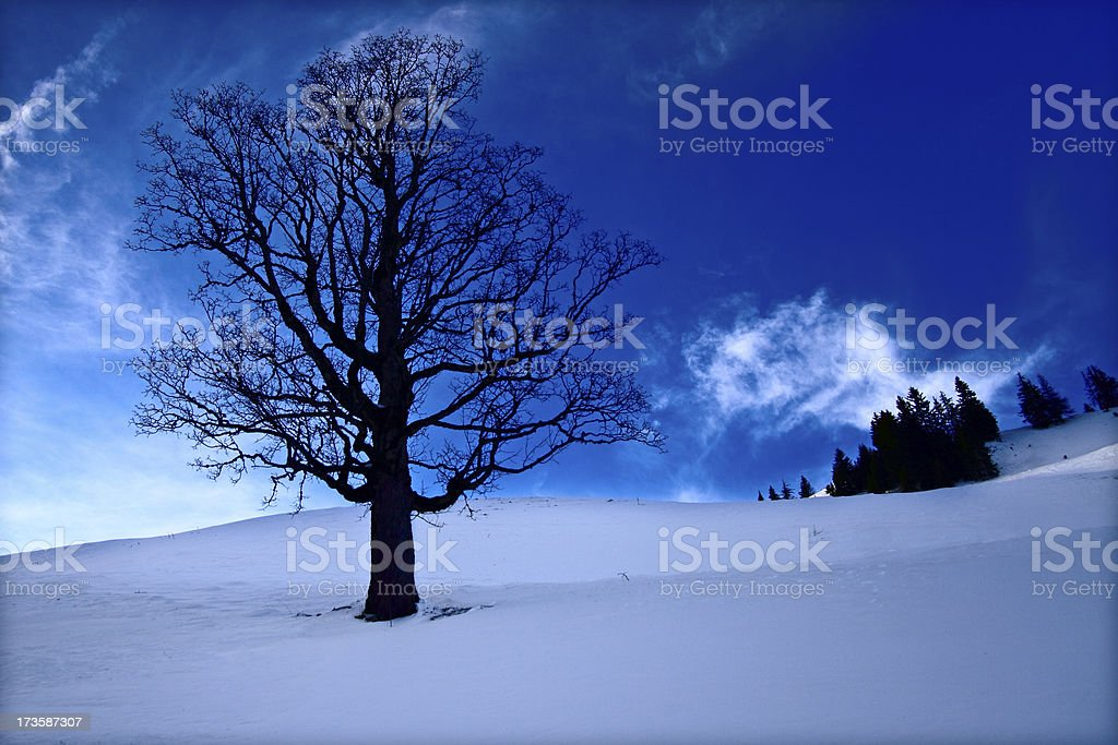 Alpine Winter Tree royalty-free stock photo