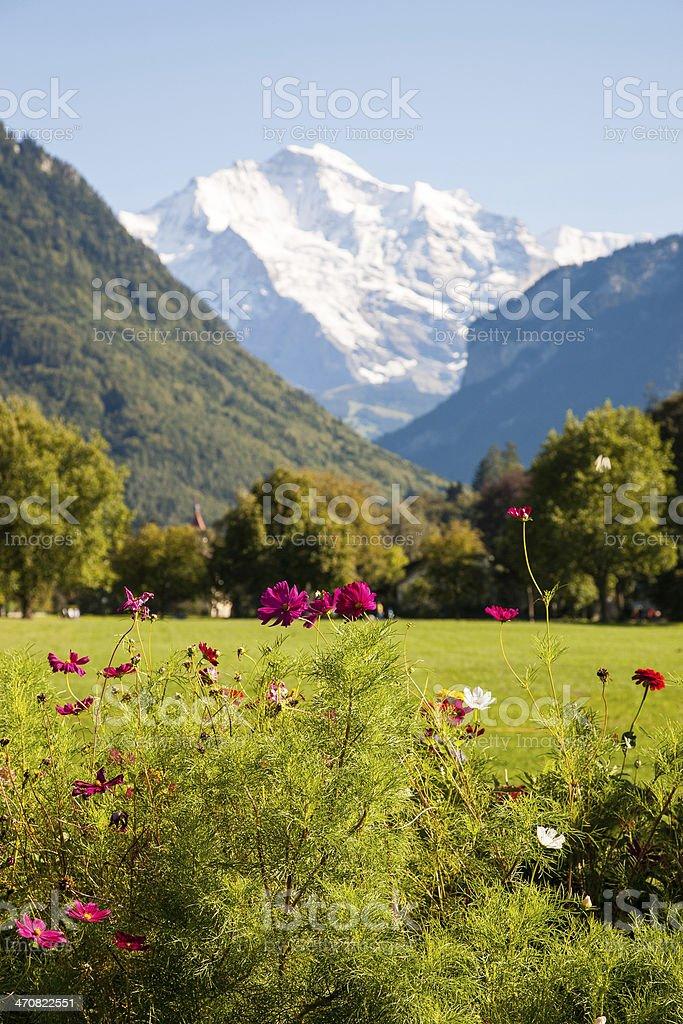 Alps behind Cosmos stock photo