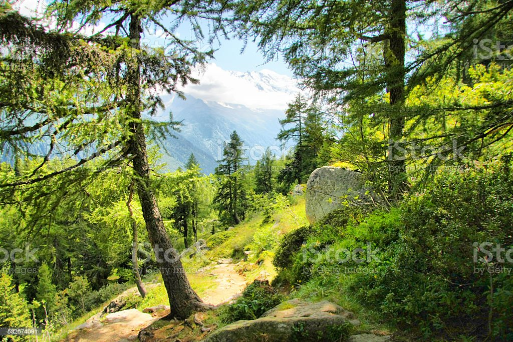 Alps forest stock photo