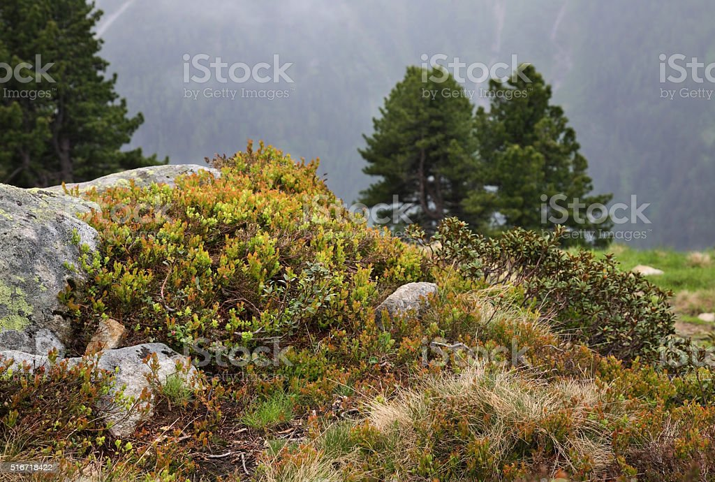 Alps near Mayrhofen. Tirol. Austria stock photo