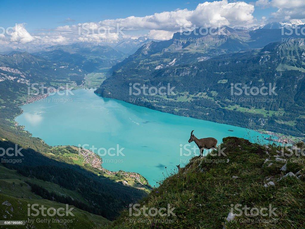 Alps of Switzerland - Panoramic View stock photo