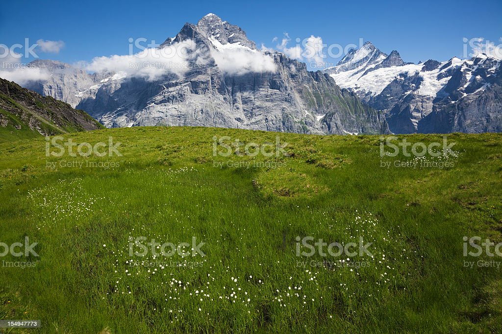 Alps summer royalty-free stock photo