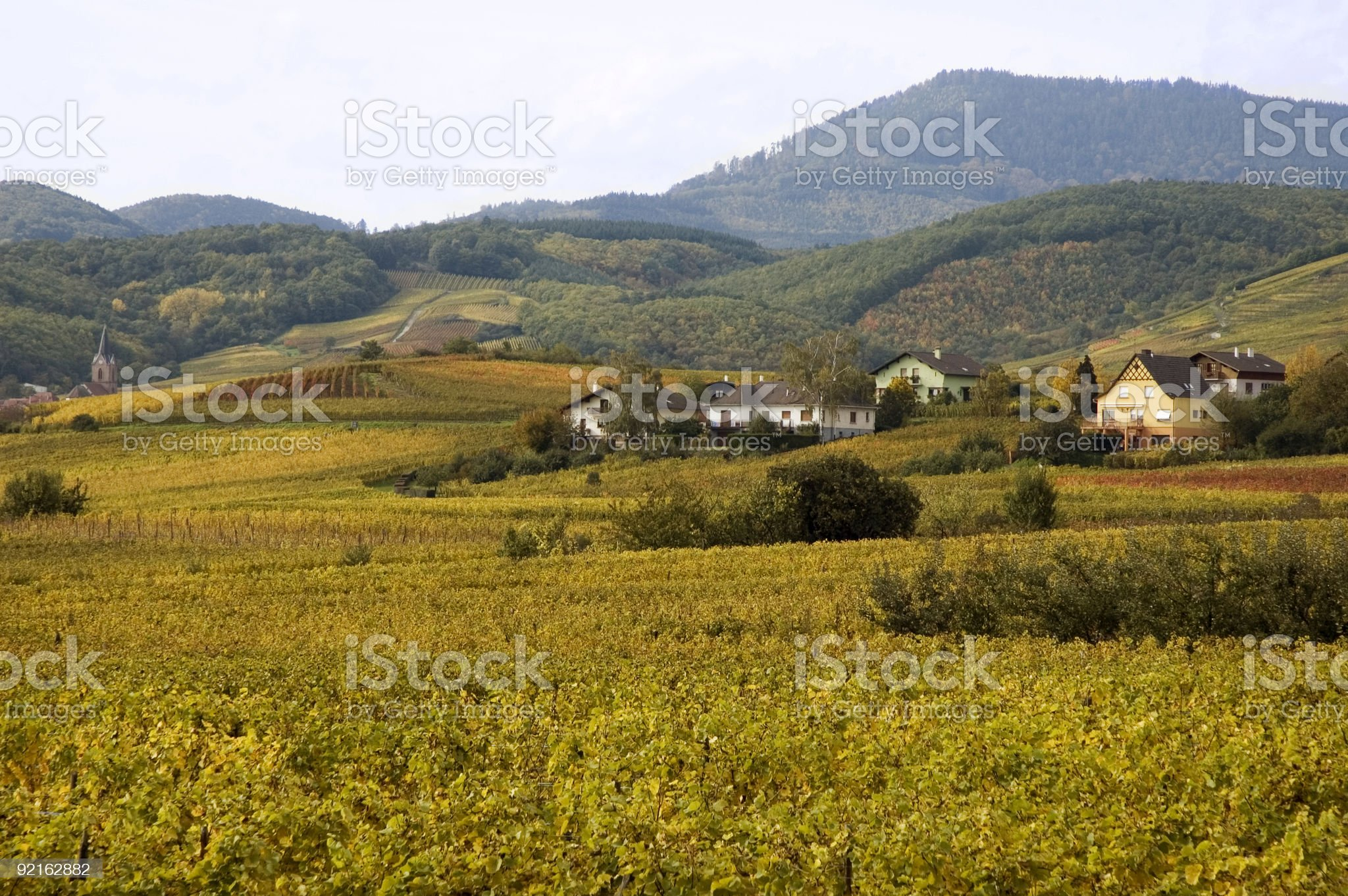 Alsace vineyards royalty-free stock photo