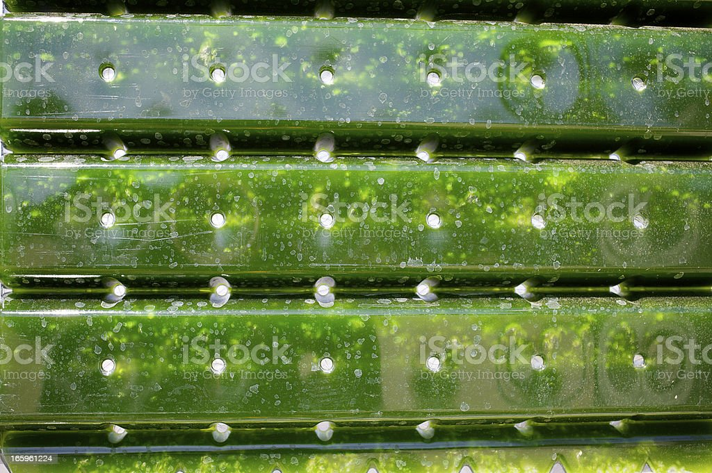 Alternative Energy: production of micro algae for regenerative power supply. stock photo
