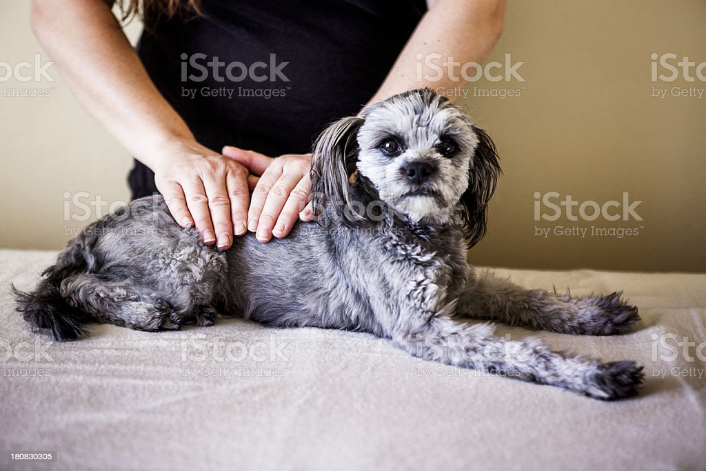 Alternative Medicine: Reiki Healing on an Animal stock photo