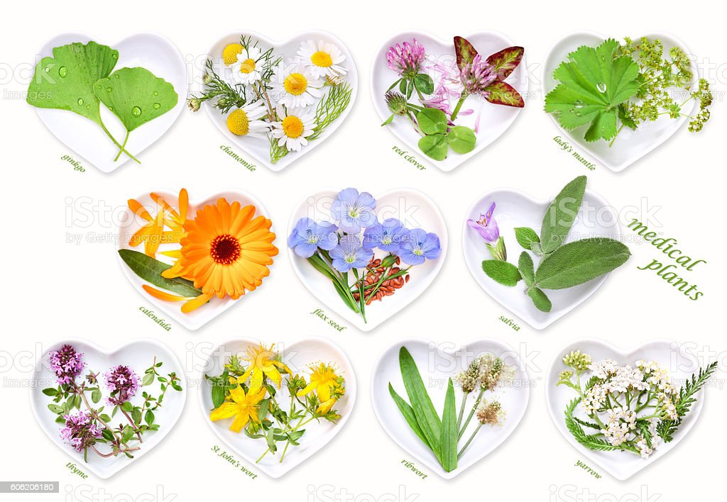 Alternative Medicine with medicinal plants 1 stock photo