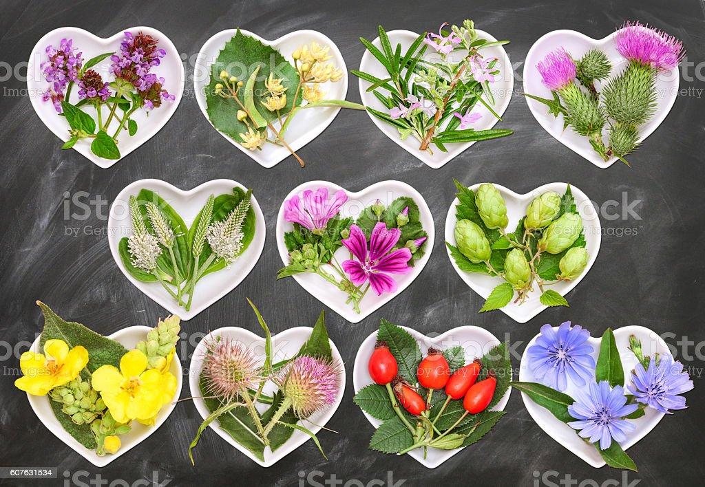 Alternative Medicine with medicinal plants 3 stock photo