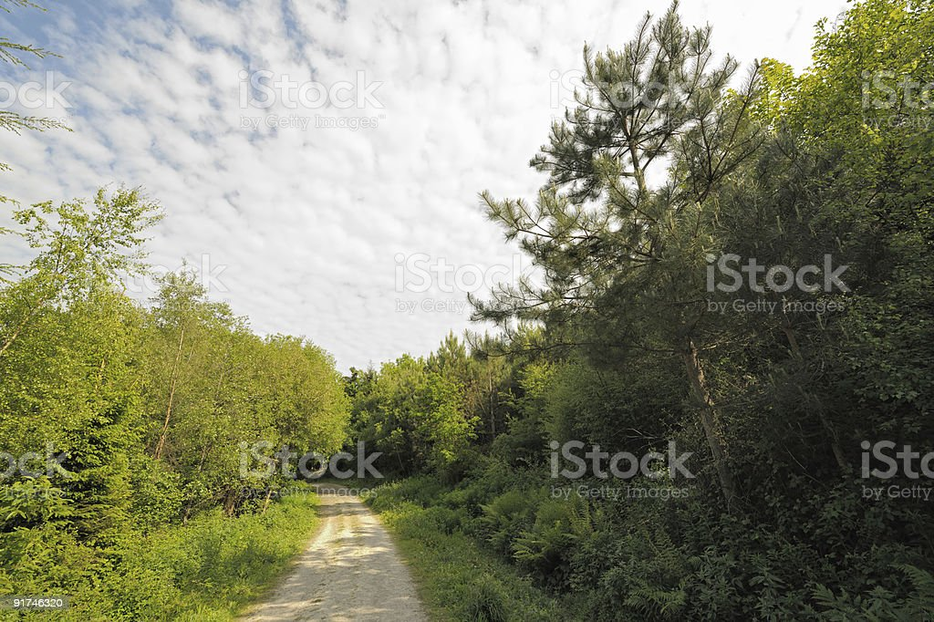 Altocumulus clouds over track through mixed wood. royalty-free stock photo