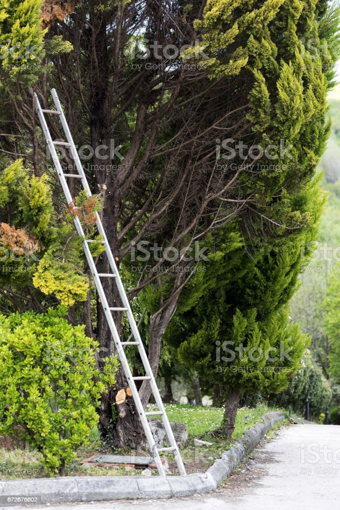 Aluminum ladder in garden stock photo