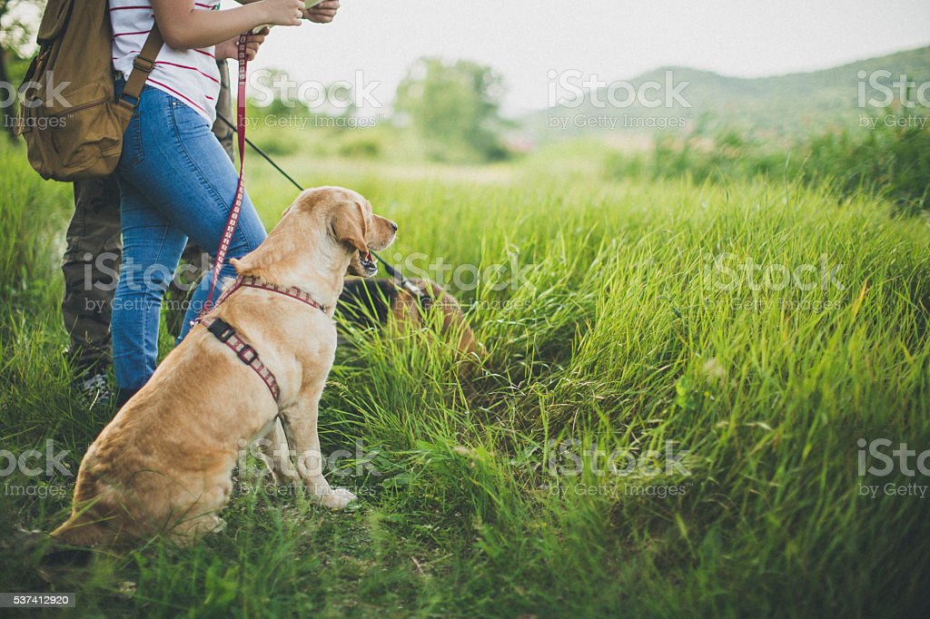 Always a faithful companion! stock photo