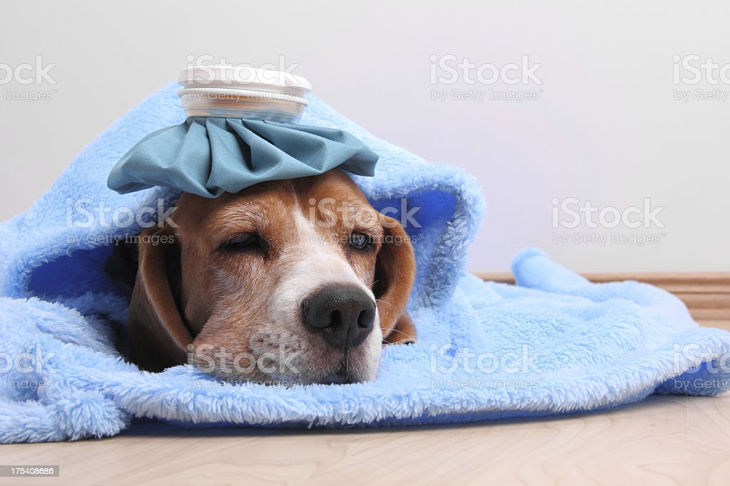 I am feeling sick stock photo