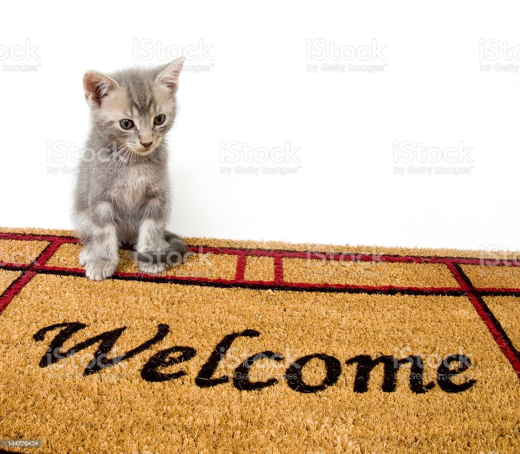 Am I really welcome to poop on this carpet royalty-free stock photo