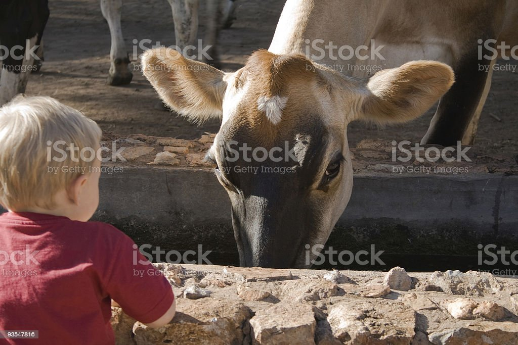 I am watching you. royalty-free stock photo