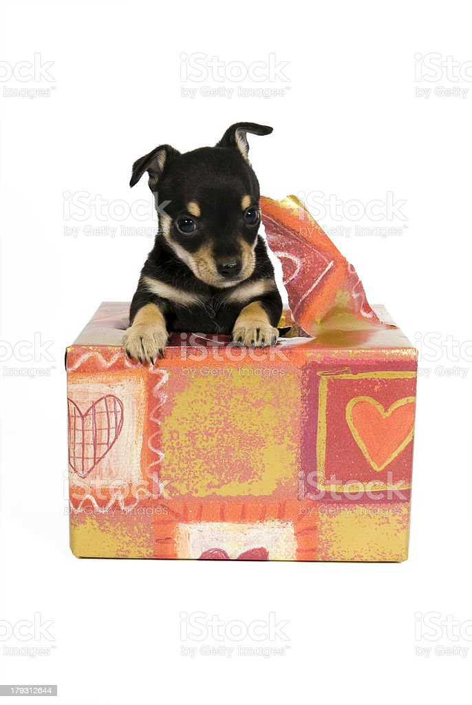 I am your gift! royalty-free stock photo