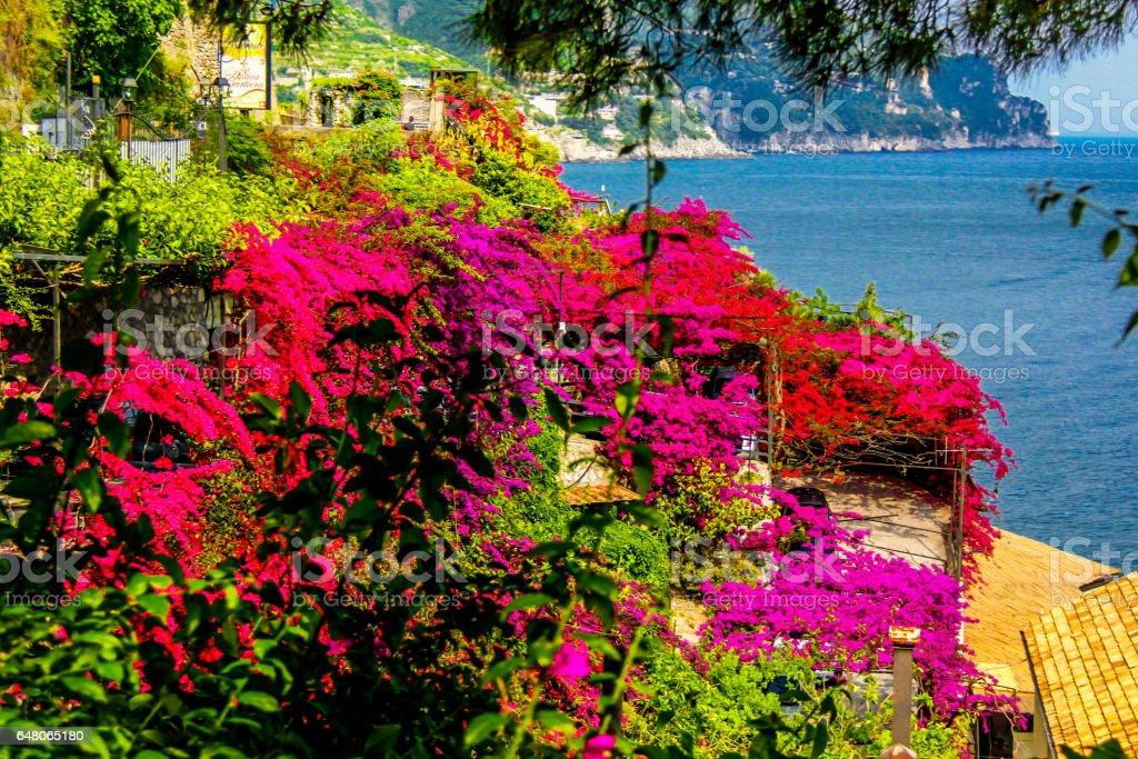 Amalfi Coast pink stock photo
