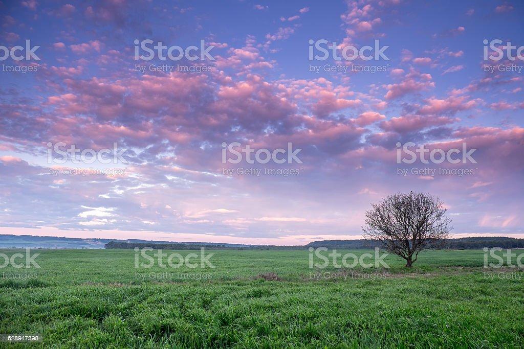 Amanecer entre campos stock photo