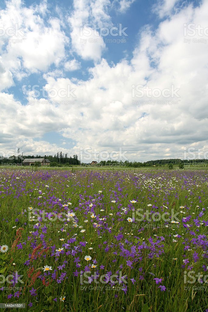 Amazing bluebell field with cloudy sky royalty-free stock photo