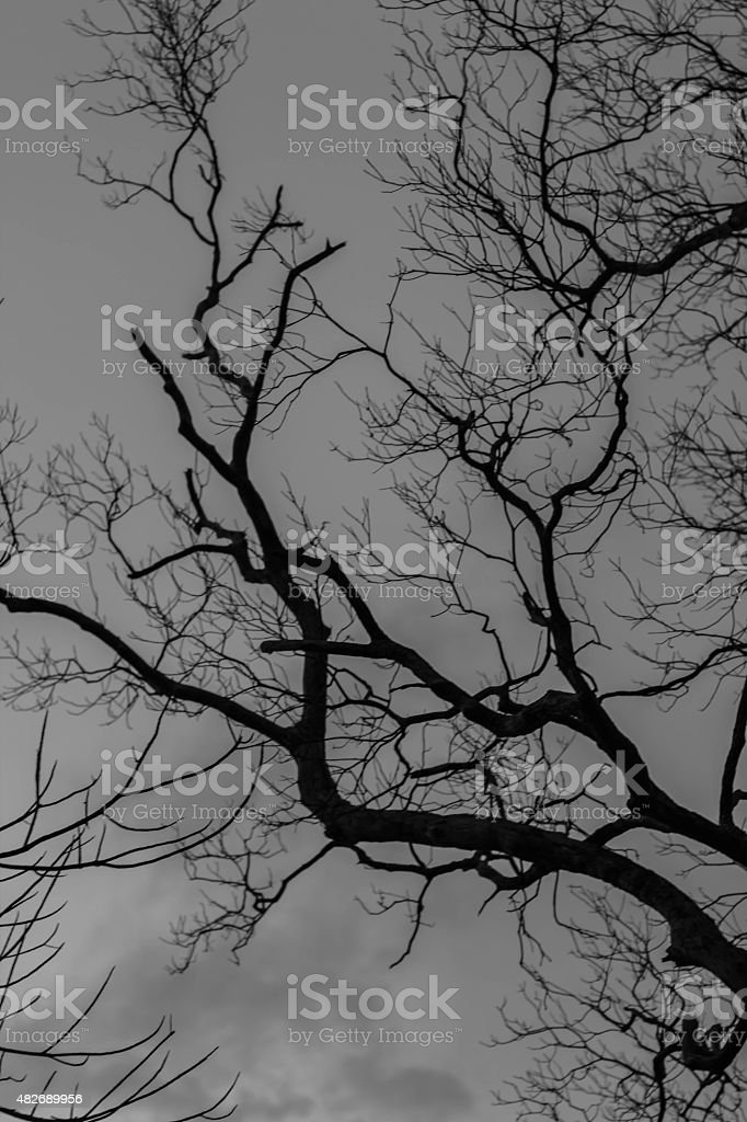 Amazing branch in nature with blue sky background stock photo