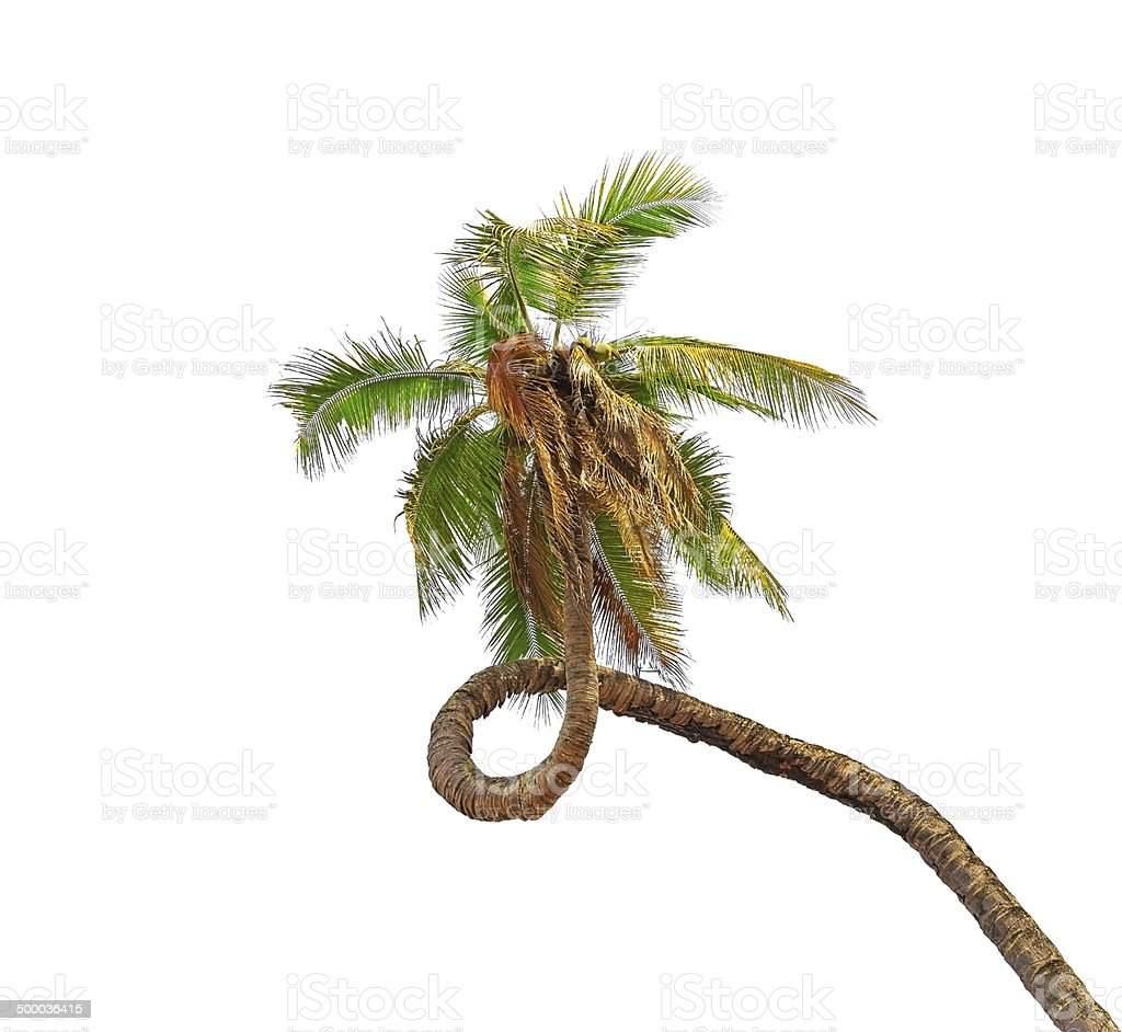 Fantastische coconut palm tree. Lizenzfreies stock-foto