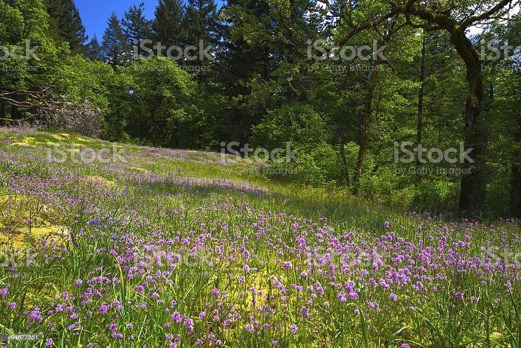 Incredibile radura della foresta con fiori di campo rosa e lilla foto stock royalty-free