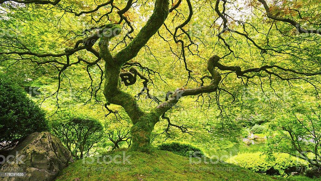 Amazing Green Tree stock photo