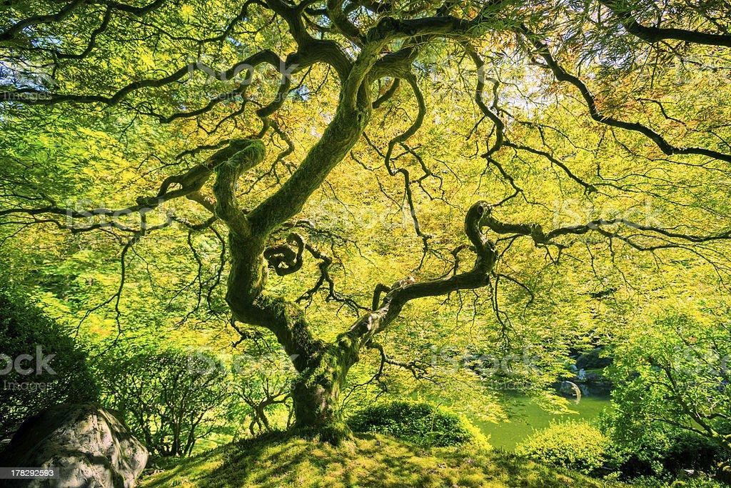 Amazing Green Tree royalty-free stock photo