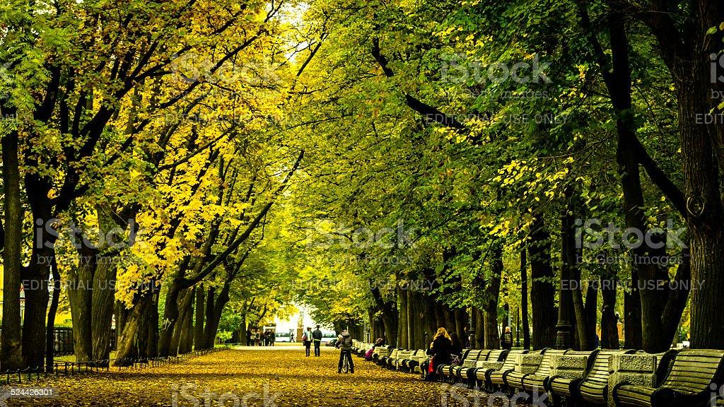 Amazing Green Walking Way stock photo