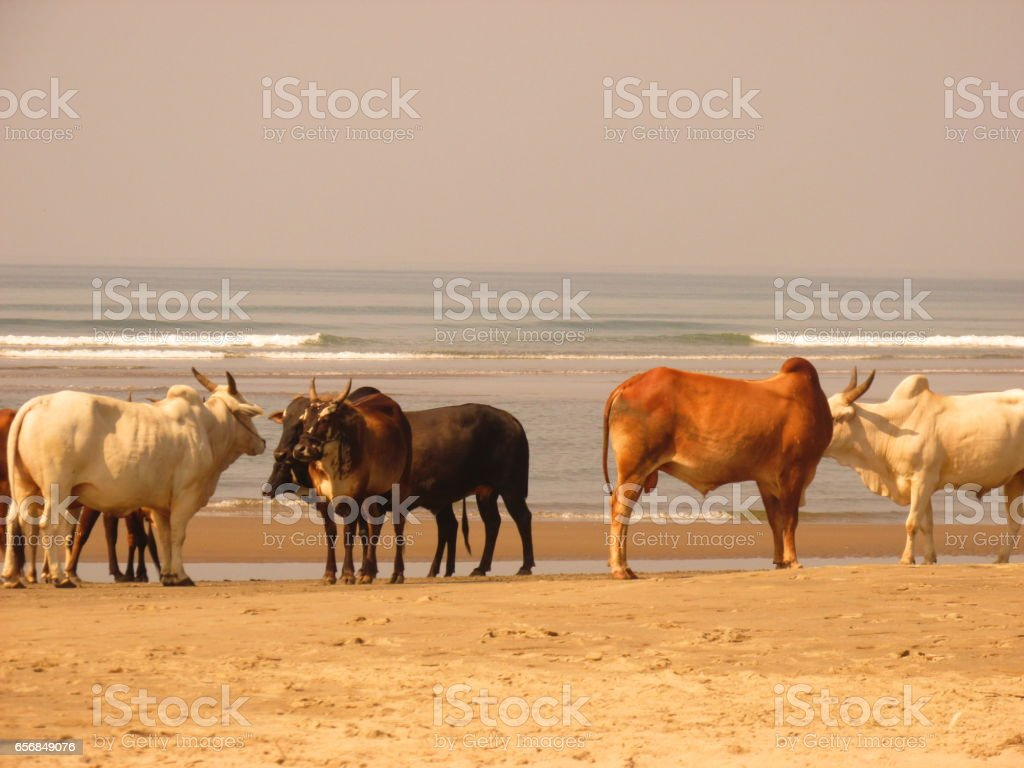 Amazing India stock photo