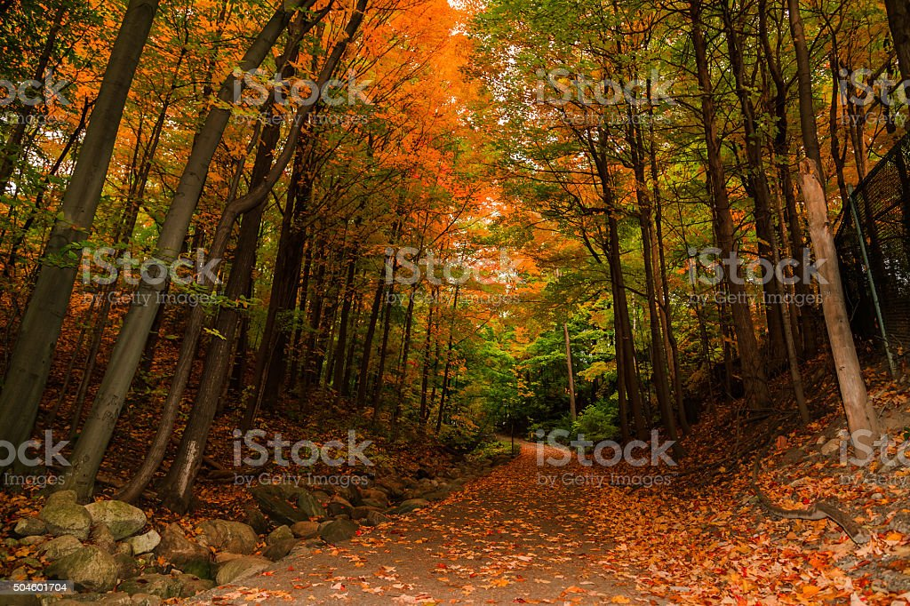 amazing inviting view of autumn woods, path in park stock photo