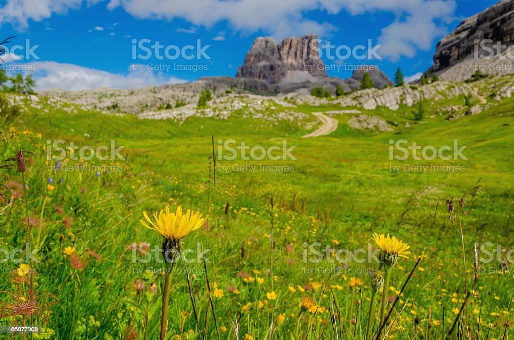 Amazing landscape with mountain flowers, Italy stock photo