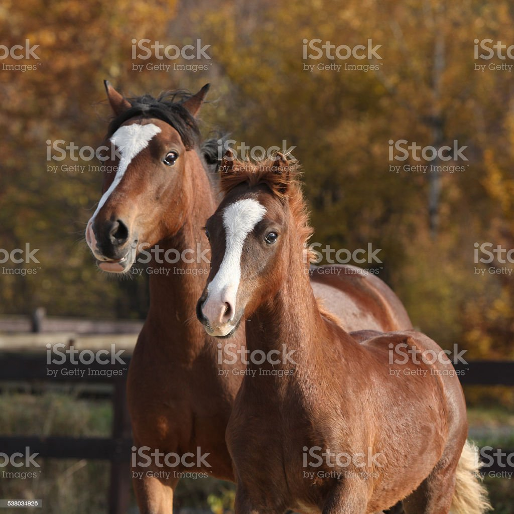 Amazing mare with beautiful foal running stock photo