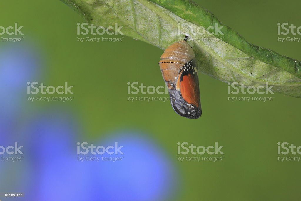 amazing moment about a butterfly stock photo
