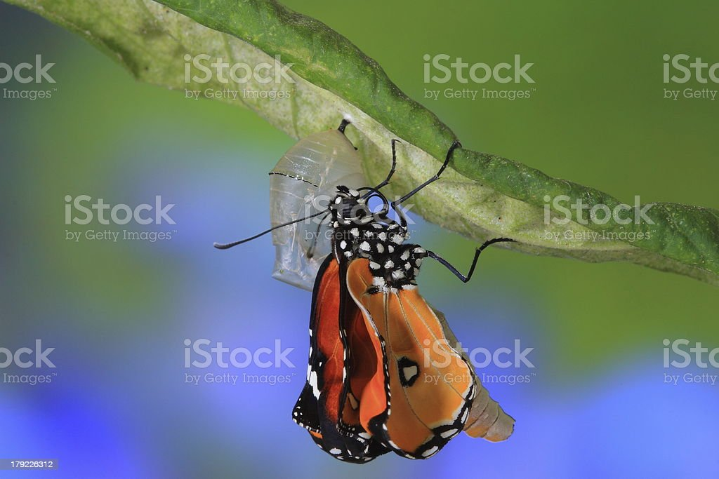 amazing moment about butterfly change royalty-free stock photo