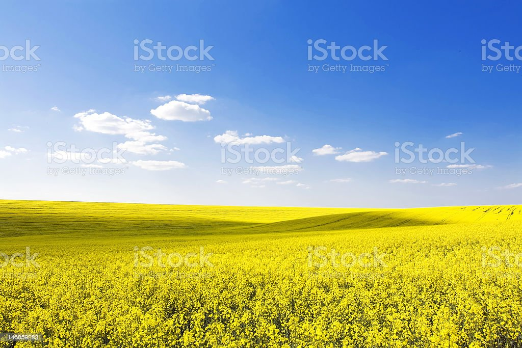 amazing nature stock photo