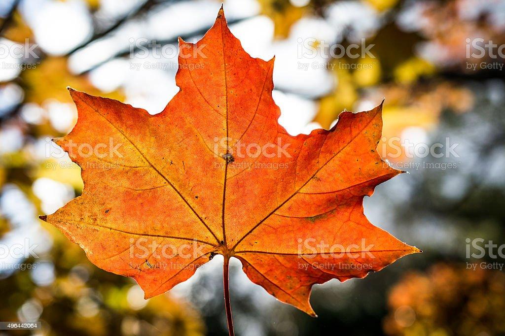 Amazing orange leaf close-up stock photo