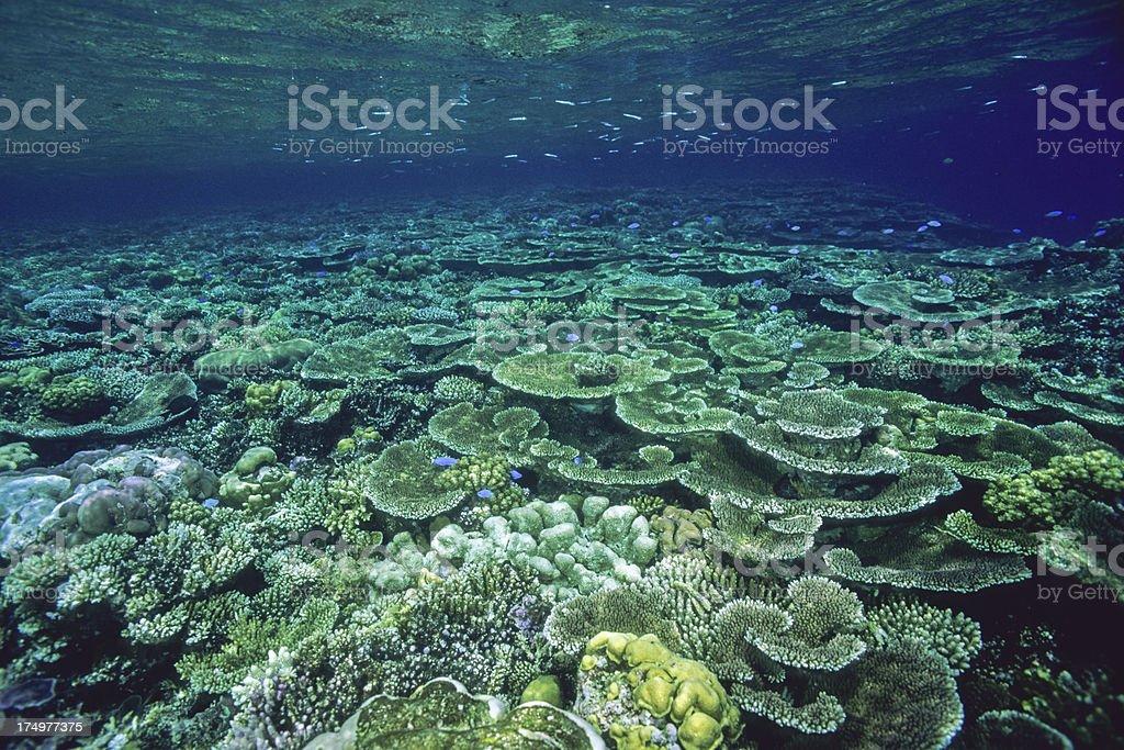Amazing Reef stock photo