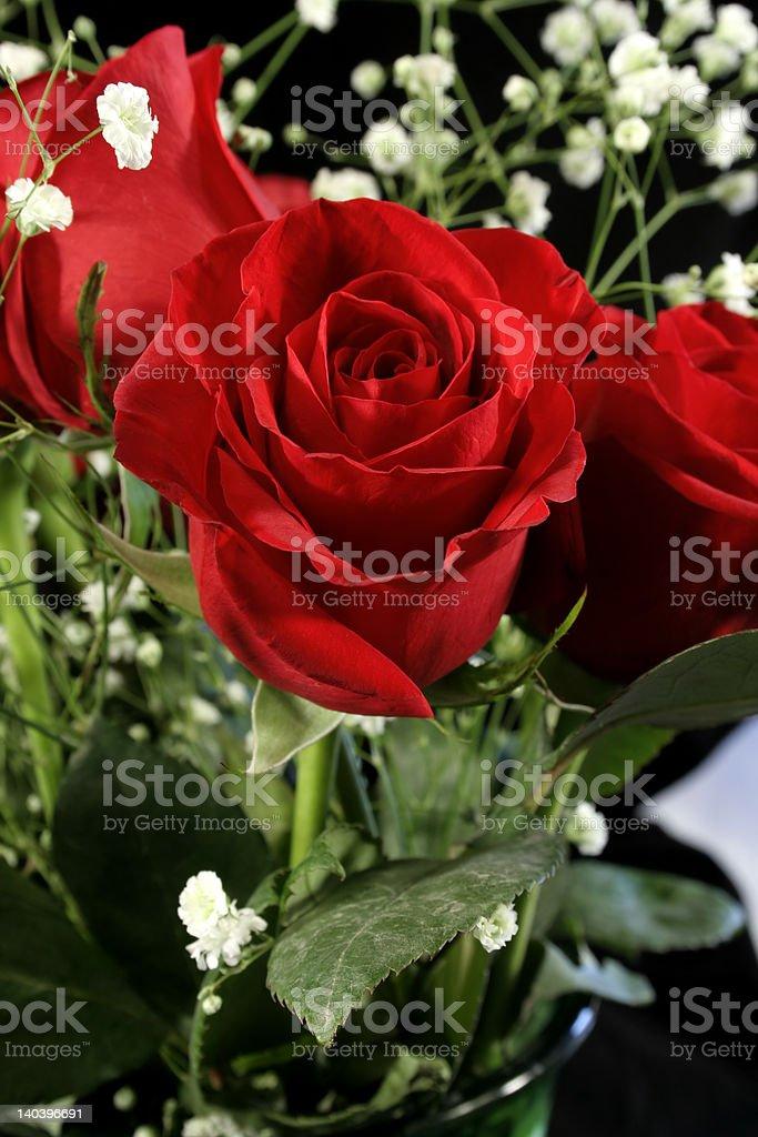 Amazing Rose royalty-free stock photo