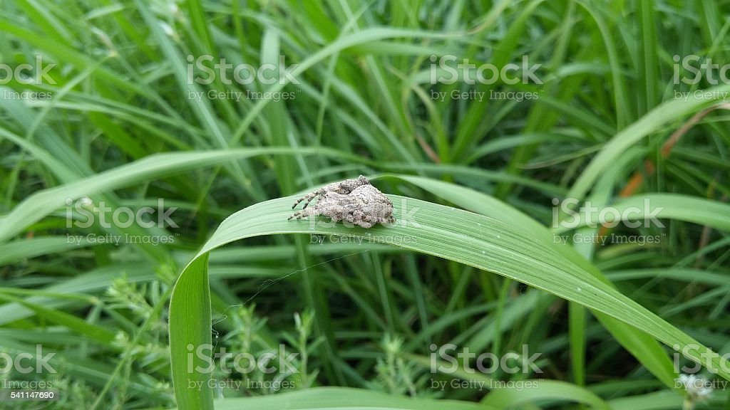 amazing spider on a leaf stock photo