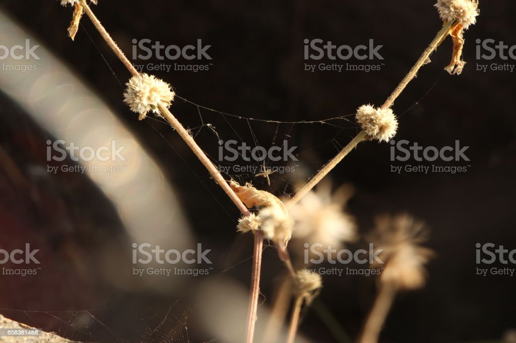 Amazing Spider stock photo
