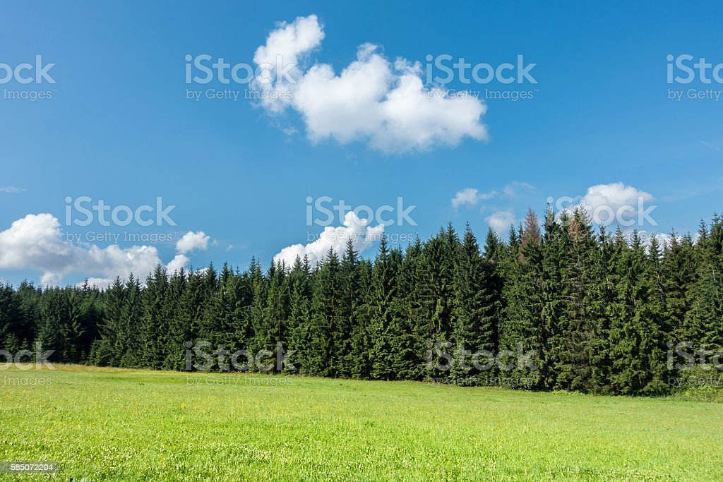 Amazing summer day in nature stock photo