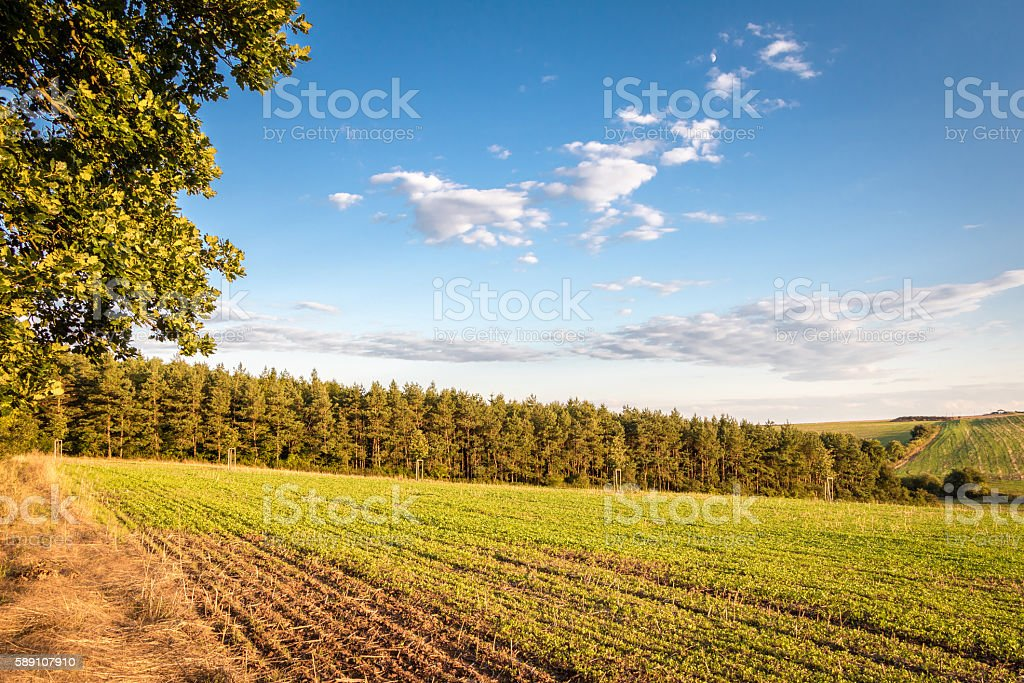 Amazing summer landscape with forest under blue sky stock photo