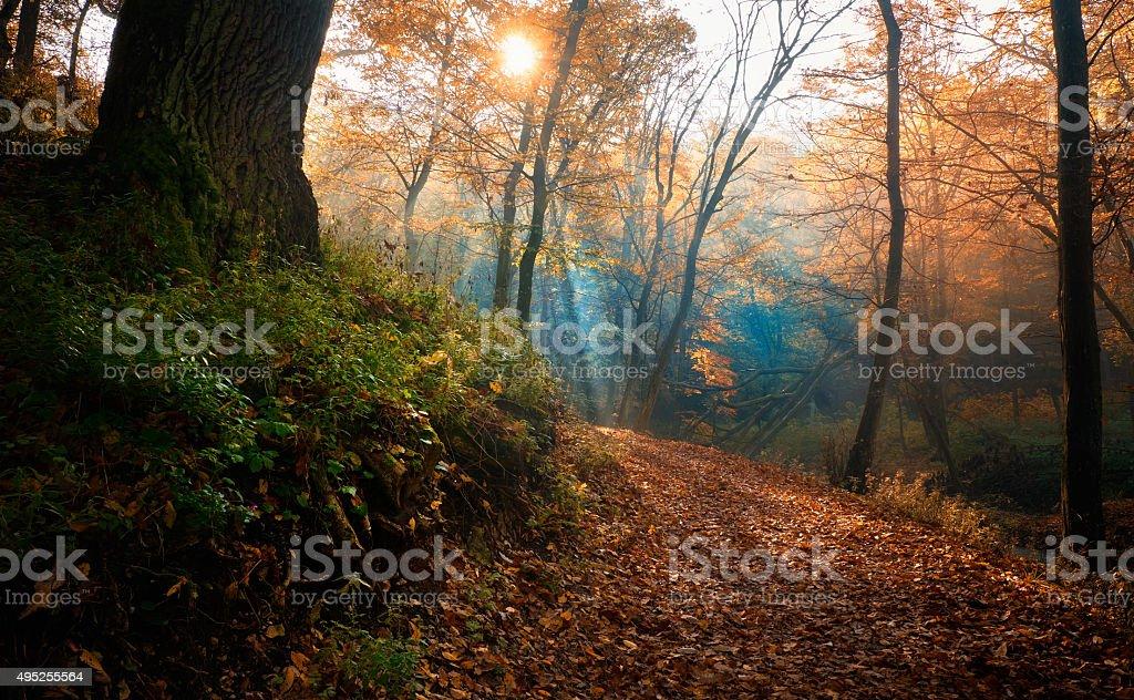 Amazing sunrays of dreamy autumn forest stock photo
