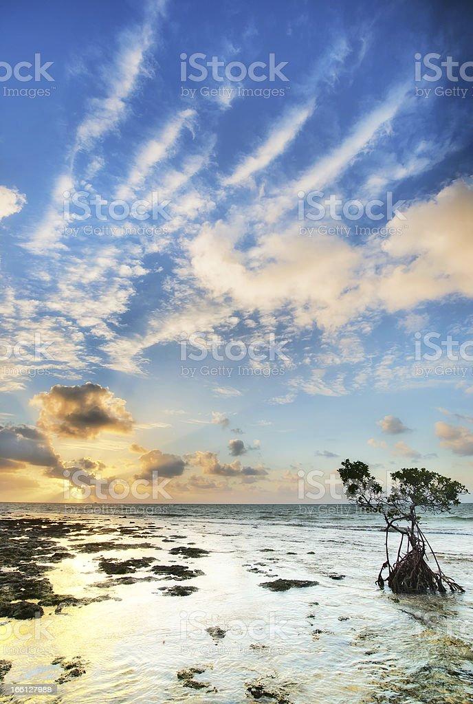 Amazing sunrise in Florida Island. stock photo