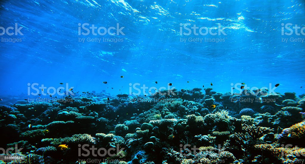 amazing underwater with tropical fishes stock photo